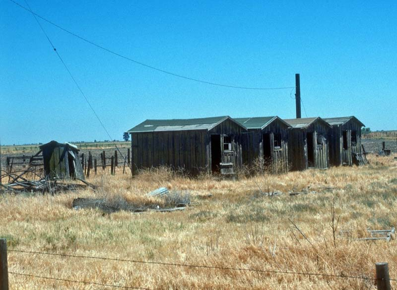 Migrant worker housing, near Los Banos, Merced, California, early 20th century