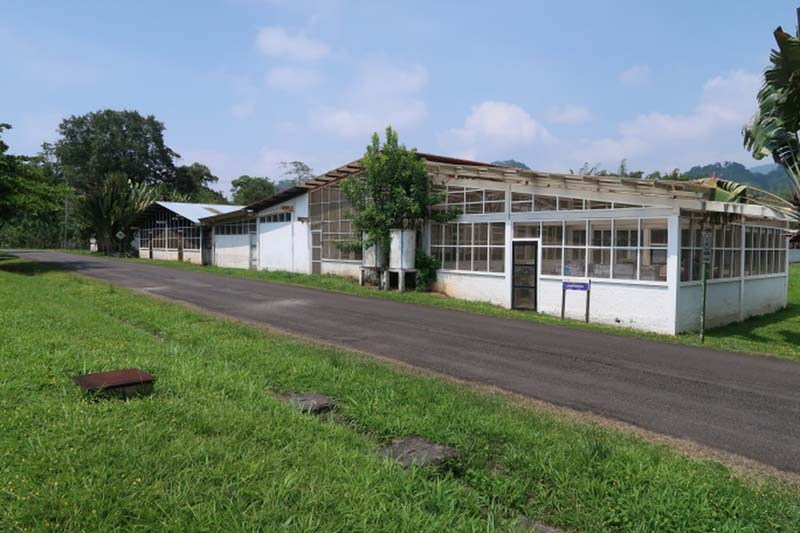 Banana plantation buildings